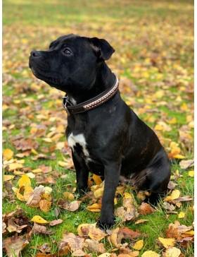 Collier pour chien Bordeaux...