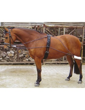 Enrênement Pessoa - Harry's Horse